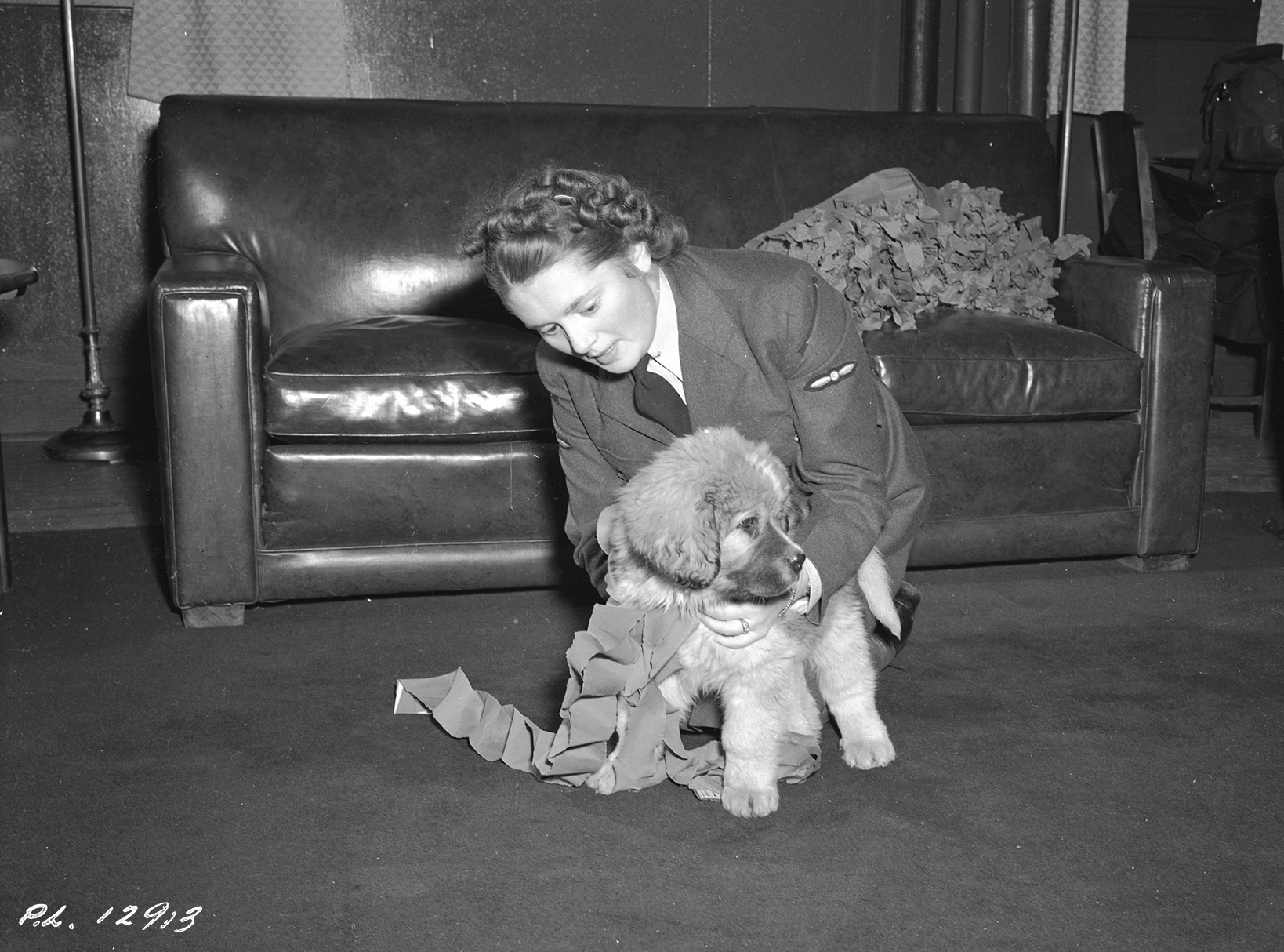 On December 11, 1942, a Royal Canadian Air Force airwomen serving at No. 9 Bombing and Gunnery School on RCAF Station Mont-Joli, Québec, decorates the school dog for Christmas. PHOTO: DND Archives, PL-12913